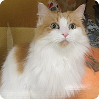 Adopt A Pet :: SNUGGLES - Diamond Bar, CA