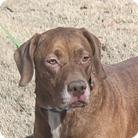 Adopt A Pet :: Crosby-UPDATE!!! - Marion, AR