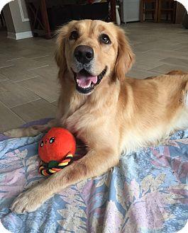 Golden Retriever Dog for adoption in Murdock, Florida - Dolly