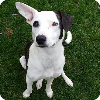 Labrador Retriever Mix Dog for adoption in Minneapolis, Minnesota - Grace