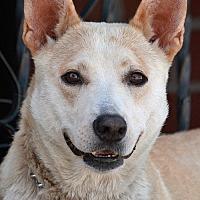 Adopt A Pet :: Gigi von Dawn - Los Angeles, CA