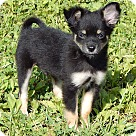 Adopt A Pet :: Fonzie (2.5 lb) Video