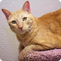 Adopt A Pet :: Beamer - Tulsa, OK