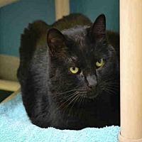 Adopt A Pet :: ZEEK - Rancho Cucamonga, CA