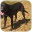 Photo 2 - Labrador Retriever Mix Dog for adoption in Glenburn, Maine - Ellie