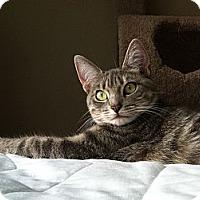 Adopt A Pet :: Missy - Mount Clemens, MI