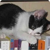 Adopt A Pet :: Iris - Davis, CA