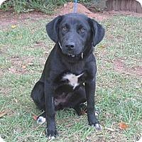 Adopt A Pet :: Daphne - Kingwood, TX