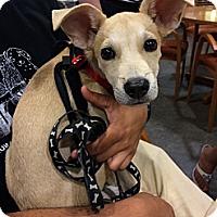 Adopt A Pet :: Lara Spencer - New York, NY