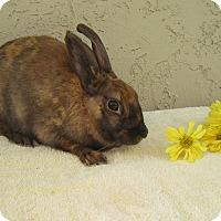 Adopt A Pet :: Cinnamon - Bonita, CA