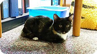 Calico Cat for adoption in Parkton, North Carolina - Tortie