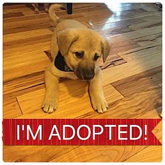Shepherd (Unknown Type)/Rottweiler Mix Puppy for adoption in Regina, Saskatchewan - Quin