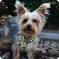 Adopt A Pet :: Pippa - Santa Monica, CA