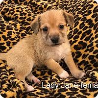 Adopt A Pet :: Lady Jane-RT - Fort Atkinson, WI