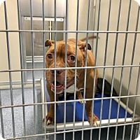 Adopt A Pet :: Monopoly - Menands, NY