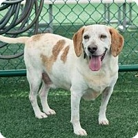 Adopt A Pet :: Cookie - Lincolnton, NC