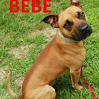 Adopt A Pet :: Bebe - Mountain View, AR