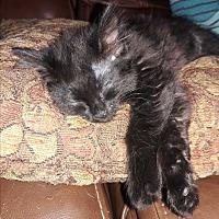 Adopt A Pet :: Stilleto - Denver, CO