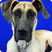 Adopt A Pet :: LUCY - LAFAYETTE, LA