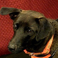 Adopt A Pet :: Boomer - Newnan, GA