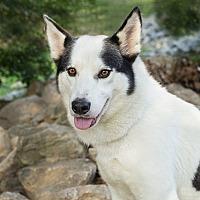 Adopt A Pet :: SUKA - Minnesota, MN