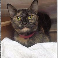 Adopt A Pet :: ADALIND - Marietta, GA