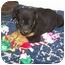 Photo 4 - Labrador Retriever/Shepherd (Unknown Type) Mix Puppy for adoption in Franklin, Virginia - Daisy