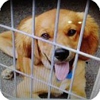 Adopt A Pet :: Jake - Newtown, CT