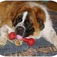 Adopt A Pet :: BUDDY - Wayne, NJ