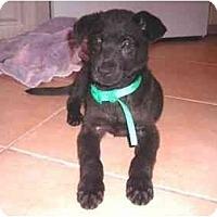 Adopt A Pet :: Tulip - Miami Beach, FL