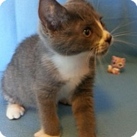 Adopt A Pet :: Funny Legs - Centralia, WA