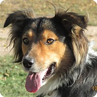 Adopt A Pet :: Kirby - Greeley, CO