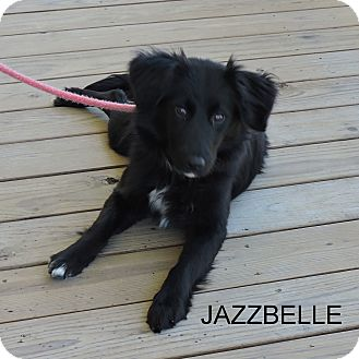 Collie Mix Dog for adoption in Slidell, Louisiana - JAZZBELLE