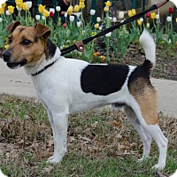 Adopt A Pet :: Cajun in Dallas ADOPT PENDING - Dallas/Ft. Worth, TX