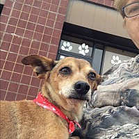Chihuahua Mix Dog for adoption in Royse City, Texas - Worm