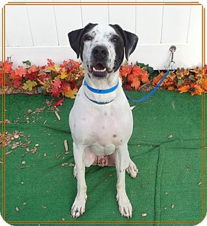 Pointer Mix Dog for adoption in Marietta, Georgia - FREEWAY