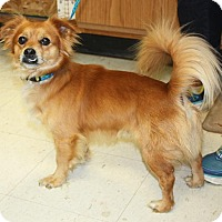Adopt A Pet :: Duckworth - available 7/2 - Sparta, NJ