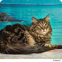 Adopt A Pet :: Frankie - Reno, NV