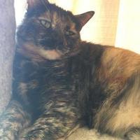 Adopt A Pet :: Margot - Metairie, LA