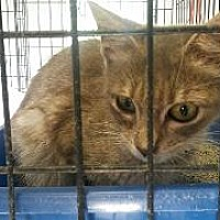 Adopt A Pet :: Marilla - Queenstown, MD