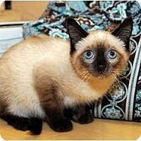 Adopt A Pet :: Kahlua - Farmingdale, NY