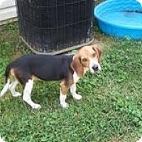 Adopt A Pet :: Erin - Dundas, VA