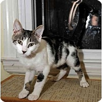 Adopt A Pet :: Saturn - Farmingdale, NY
