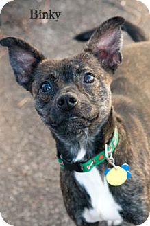 Terrier (Unknown Type, Medium) Mix Dog for adoption in West Des Moines, Iowa - Binky