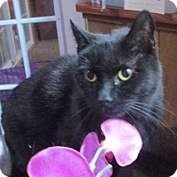 Adopt A Pet :: Blackie - Witter, AR