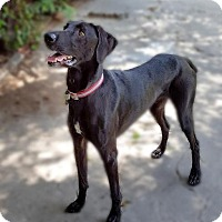 Adopt A Pet :: Willy - Sun Valley, CA