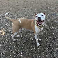Adopt A Pet :: Heaven - Chico, CA