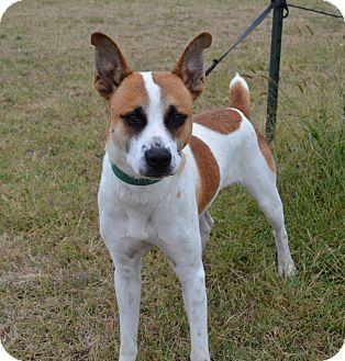 Terrier (Unknown Type, Medium) Mix Dog for adoption in Larned, Kansas - Bandit