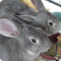 Adopt A Pet :: Gilda and Goody - Williston, FL