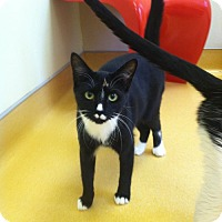 Adopt A Pet :: Casey - Hudson, NY
